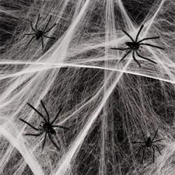 Halloween spindelvæv