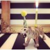 Tiger lysholder som caketopper til fødselsdagskage