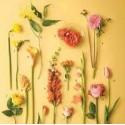 Blomstret